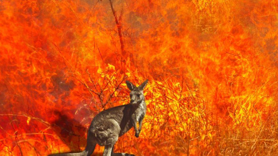 Australian+Wildfires